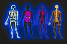 فیزیولوژی (Physiology) چیست؟