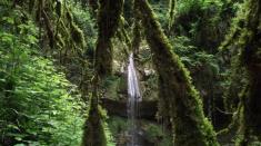 معرفی کامل آبشار ولیلا سوادکوه (زیرآب) + آلبوم عکس