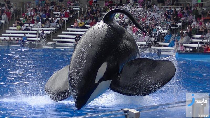 نهنگی که مربی خود را کشته بود، در 36 سالگی درگذشت