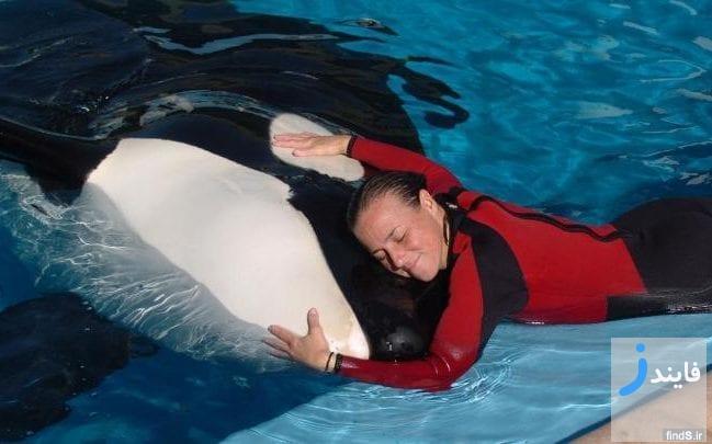 نهنگی که مربی خود را کشته بود پس از 36 سال درگذشت