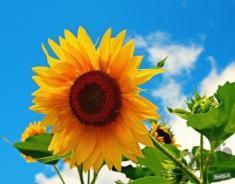 دانستنیهای جالب و بامزه در مورد گل و گیاه