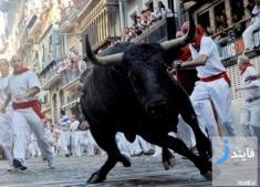 7 نفر در جشنواره های گاوبازی اسپانیا کشته شدند