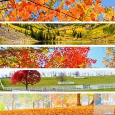 مناسب ترین تورها برای فصل پاییز
