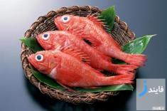 قیمت انواع ماهی و میگو پرورشی + ماهی تازه جنوب