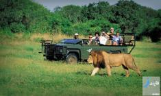راهنمای سفر به آفریقای جنوبی + معرفی مکان های دیدنی و تاریخچه