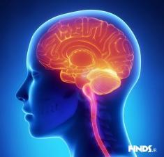 مغز چگونه خاطره ها را ذخیره می کند؟