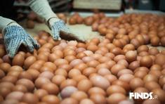 عرضه جنجالی تخم مرغ های قهوه ای در بازار ایران