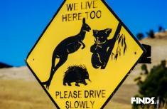 ماجرای رانندگی پسر 12 ساله استرالیایی خبرساز شد!