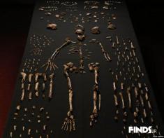 کشف فسیل انسان اولیه با قدمت سه میلیون سال!!
