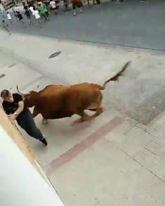 خشم یک گاو را در مراسم گاوبازی اسپانیایی ها ببینید!
