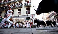 آلبوم عکس گاوبازی / تفریحی پر از هیجان و حماقت در اسپانیا