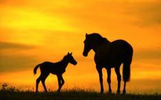 یک باند قاچاق گوشت اسب منهدم شد