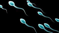 کاهش تولید اسپرم در مردان و منقرض شدن تدریجی نسل بشر + دلیل کاهش اسپرم در منی