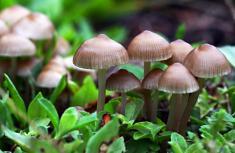 برای درمان افسردگی، قارچ جادویی بخورید!