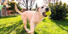 داشتن سگ خانگی، جلوی بیماریهای قلبی و عروقی را می گیرد!