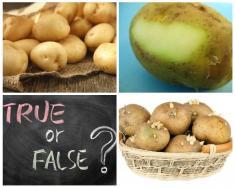 مراقب سمی خطرناک در سیب زمینیها باشید / علائم مسمومیت سَم GA چیست؟