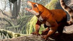 کشف فسیلی جدید که حکایت از تاریخ کره زمین دارد!